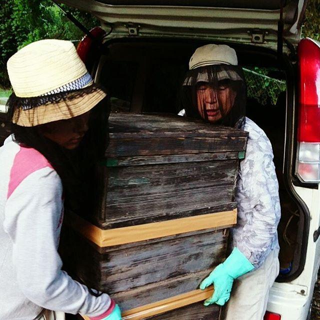 【みつばちの引っ越し】烏山椒に囲まれた標高100mの山の養蜂場へみつばちを集めました。#烏山椒のはちみつ #山好きな人と繋がりたい #廣田養蜂場 #引っ越し#みつばちphoto#下関ブランド#やまぐち#madeinJapan #lawhoney #onlyonelife
