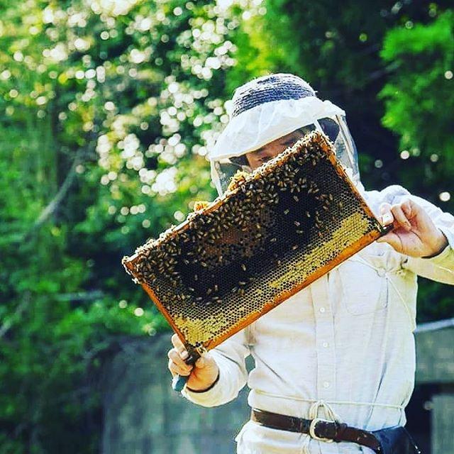 【採蜜とみつばちの引っ越し】昨日、標高の低い場所での烏山椒の採蜜が終わりました。今朝はこれから烏山椒の蜜が入り出す山の養蜂場へその巣箱を移動してきました。#引っ越し完了 #今朝 #標高 #蜜 #昨日 #早朝 #巣箱 #移動して #廣田養蜂場 #みどり