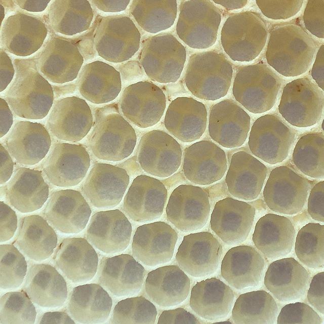【ハニカム構造「Honeycomb」】「蜂の巣」という意味のハニカムは正六角形に隙間なく並べた構造のことを指しますでもよーく見てください全て正六角形ではありませんよねみつばちがつくり始めたばかりの上の方は「円形」です巣を盛っていくにつれはじめは円だったものが円柱になり上からの重力やまわりからの圧力で段々と六角形に変形していくんです平面を隙間なく敷き詰めることを「平面充填」というのですが全て同じ形状で平面充填が可能なのは、三角形・四角形・六角形しかありませんこの図形のうち、外周の長さが等しくその面積が最も大きくなるのは正六角形だけなんですつまり「同じ量の蜜蝋」で「最も多くはちみつを保存できる」のは正六角形を組み合わせたこの「ハニカム構造」の巣だけということになりますみつばちは自然界の法則を巧みに利用して生きているのですねこの新しいハニカムのみでできたフレッシュな蜜蝋をお取り扱いしております宜しければご覧くださいね#ハニカム #honeycombs #honeybee #raw #rawlife #rawhoney #madeinjapan #japan #japan_of_insta #廣田養蜂場 #山口県下関市 #yamaguchi #shimonoseki #非加熱はちみつ #非加熱 #みつばち #natural #naturalbeauty #ミツロウ